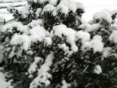 また…大雪?
