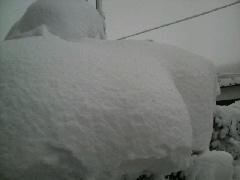 やっぱり…大雪